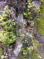 Free photo texture - Moss in frozen ice #1 by croicroga