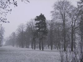 tree collection: in the snow by Germanstock