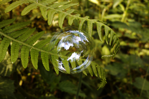 bubble on plant by TomRolfe