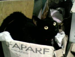 my cat darky by Donyle