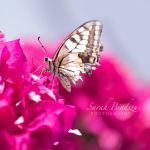 Schmetterling. by Blueberryblack