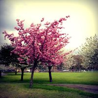 Deptford Park :001: by ActiveSlacker
