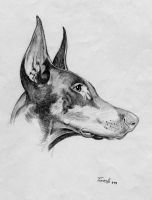 Doberman Dog 2. Pencil by FrozenPinky