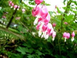 bleeding hearts by ZombieLothar