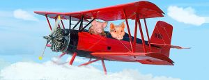When Pigs Fly by Some-Other-Guy