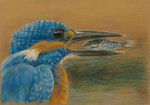 Kingfisher by llille