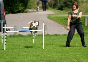 Agility practice by piglet365