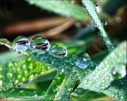 Refractions in the Dewdrops by Firey-Sunset