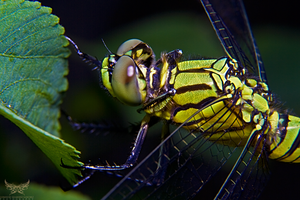 Insectoraphy by lee-sutil