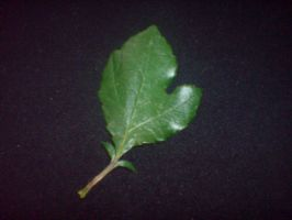Leaf 2 by EmKins-Resources