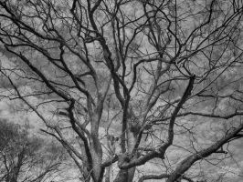 Branches by VoodooHammer