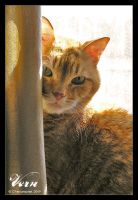 Vern in the Window by ConnieFaye
