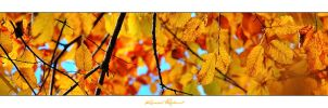 A Thin Slice of Autumn III by zozzy1980