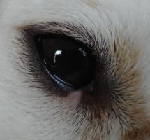 Dog eye by NoraDevius
