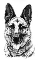 German Shepard Dog 3 by ArtOfAProcrastinator