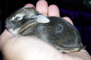 hand full of bunny by wiccanwitchiepoo