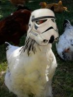 Chicken Stormtrooper by EchoingWolfCall