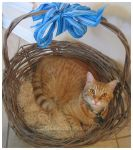 Tabby Baby Basket by beachbumbunny