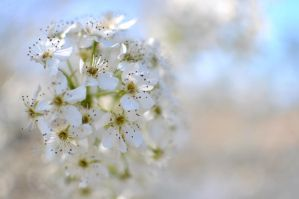 Springtime Means BOKEH Time by jndphotography