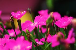 Crowd of Pink by Stolzer