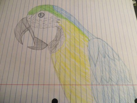 a parrot c: by 0Duckie0