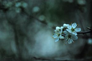 shades of spring IV by Lk-Photography