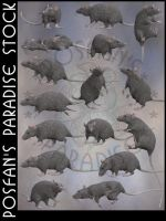 Rats 002 Grey by poserfan-stock