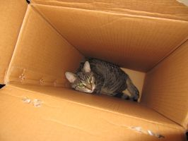 In a Box by kwuus
