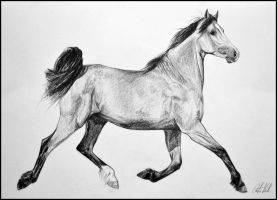 Drawing-Lusitano horse by Ennete