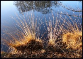 Again some grasses by jchanders