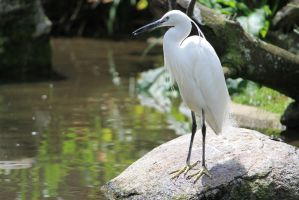 White bird by Linay-stock