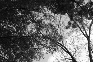 Silhouetted Tree Branches by Jordanart4peace