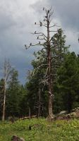 Lake Kaibab Storm by Speck2