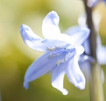 Bluebell stock by Quinnphotostock