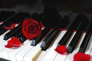 Piano::Rose 02 by kazuaka