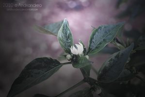 The Flower by Andriandreo