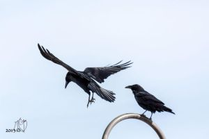 Rest Stop Ravens by NTGreen