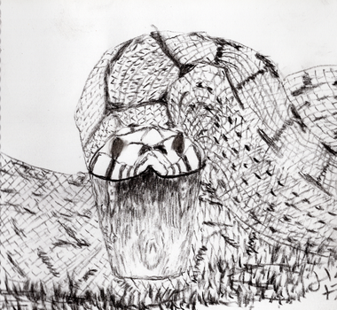 Snake - charcoal by jerryhat