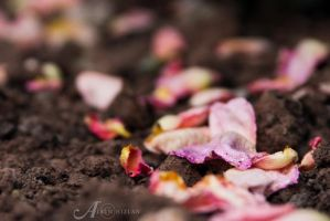 Scattered by alkimh