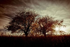 Two Trees d Automne by roon1305