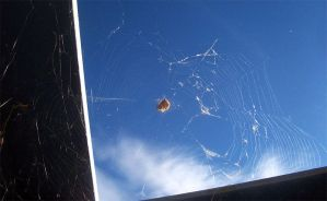 Orb Weaver by Mountaineer47
