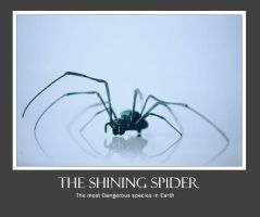 The Spider by informer