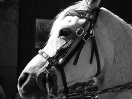 horse by candy691977