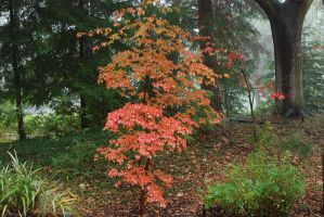 Wet, Foggy, Red by smfoley