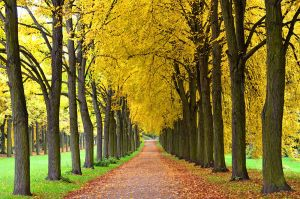 autumn alley by augenweide
