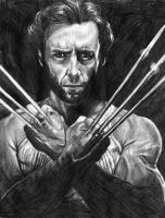 WOLVERINE by stargate4ever23