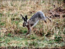 A Young Hare Exploring The World Cellphone Shott by eskile