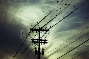 The Gathering of Birds by jmarie1210