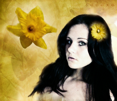 It's All About Daffodils by SoDoXa