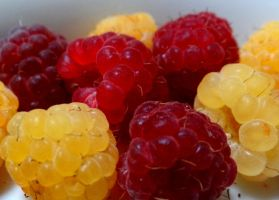 Yellow and red raspberries #2 by Aroha-Photography